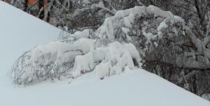 Mueder Baum mit Schneelast